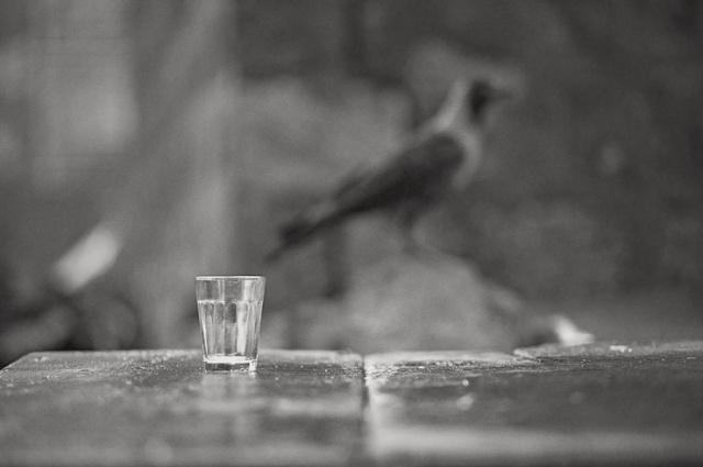 018 - crow and glass