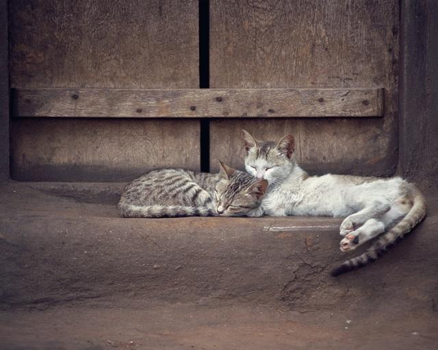 022 - sleeping kitties