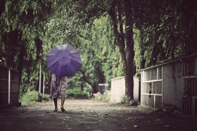 027 - violet umbrella lady