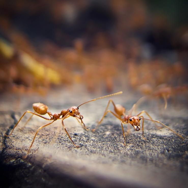 032 - Feb 01 - ants