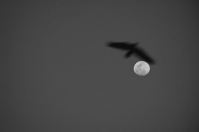 045 - crow and moon