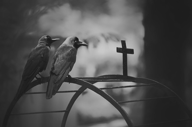 046 - crows and cross
