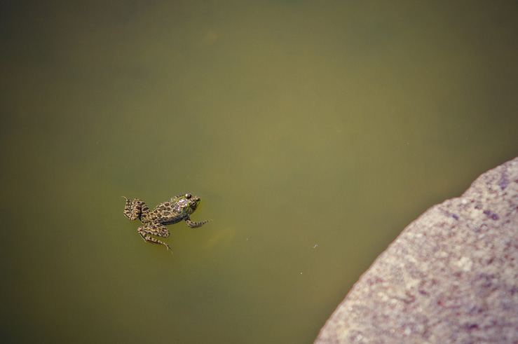 060 - Frog in Chitharal