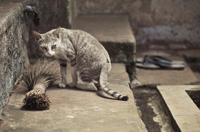 069 - cat broom chappal