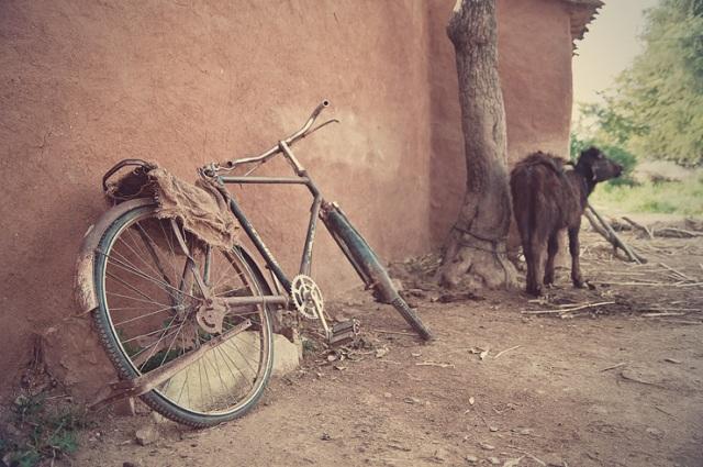 070 - cycle and baby moo