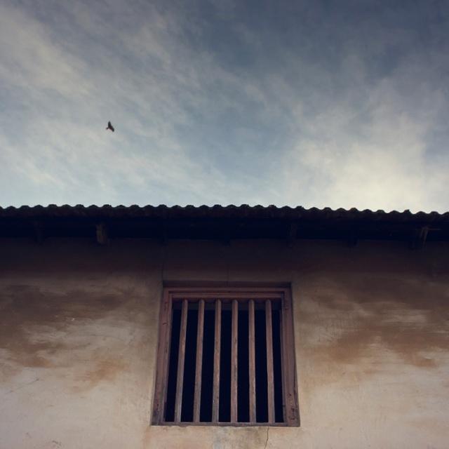 076 - chalai window and bird
