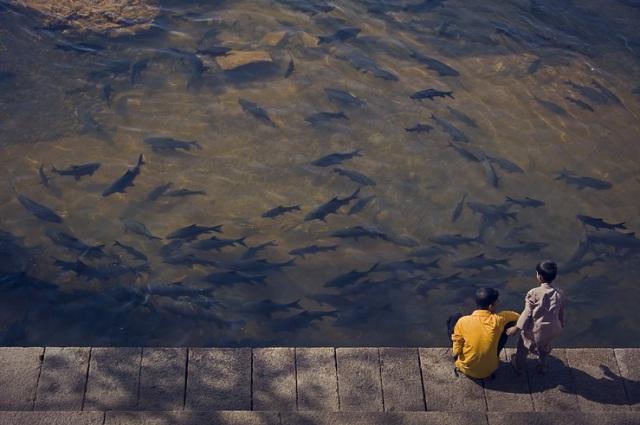 078 - kids watching fish