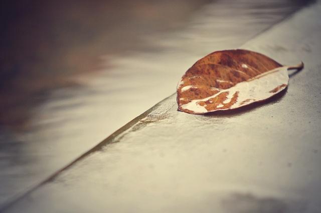 079 - leaf on the ground
