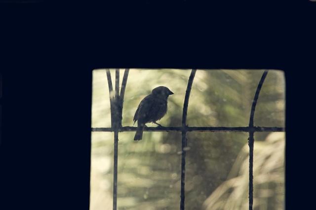 084 - tiny visitor