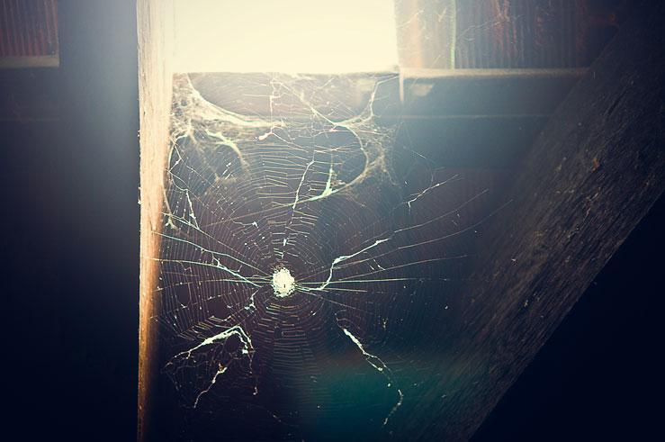 107 - cobweb